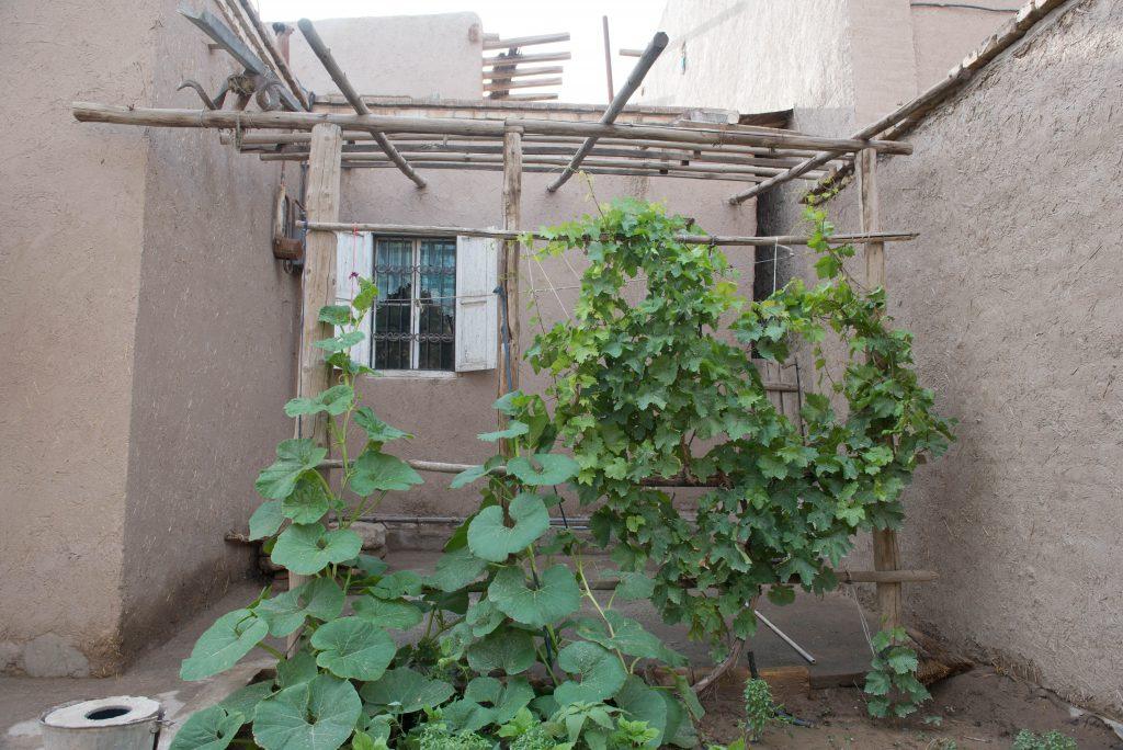 家の脇には小さな菜園や、花もちらほら。